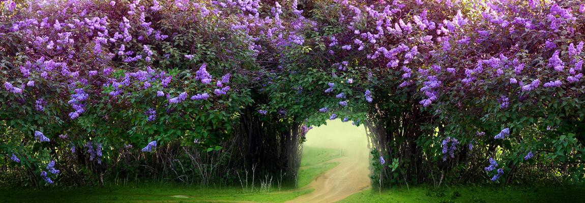 Wonderful_Garden_Game_MyGarden_Gaudor